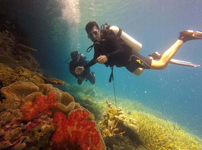 diving pulau harapan